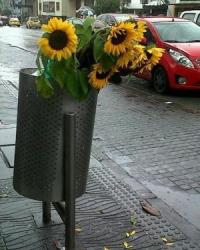 Sunflowers in a stainless steel trash can