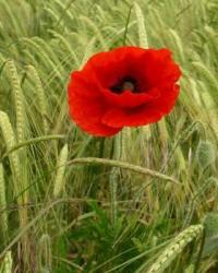 The eve of Remembrance Day