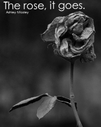 The rose, it goes.