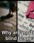 Why are you too blind to see?