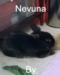 my pet rabbit, nevuna