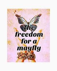 The freedom for a mayfly