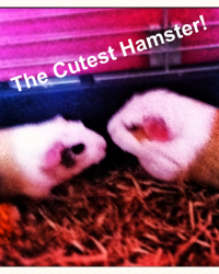 The cutest Hamster!