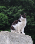 Stand in the rain *A warrior cat fanfiction*