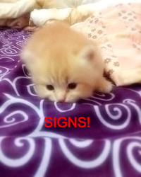 My Signs!