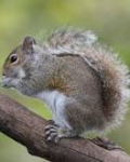 Fredward the Squirrel and other short stories