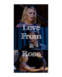 Love From a Rose