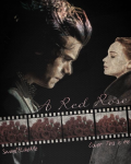 A Red Rose | A Harry Styles Fan Fiction