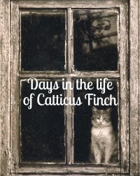Days in the life of Catticus Finch