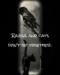 Ravens and cats don't go together