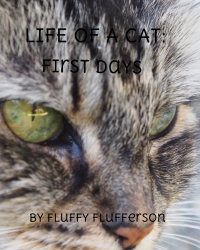 Life of a Cat: First Days