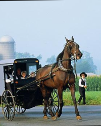 Faith's Revelation:An Amish Romance