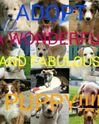 ADOPT A WONDERFUL AND FABULOUS PUPPY!!