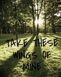 Take these wings of mine