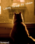 Looking Through the Window: A Poetry Movella
