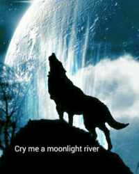 Cry me a moonlight river
