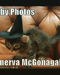 The baby pictures of Hogwarts professors