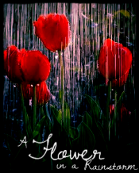 A Flower In A Rainstorm