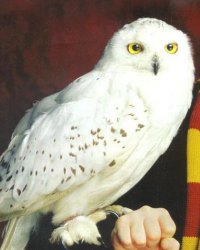 The Truth About Hedwig