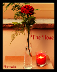 The Rose *For Dia de Los Muertos competition*