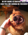 Funny Memes and Pictures
