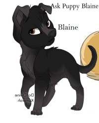 Ask Puppy Blaine