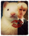 The kiss of the ferret