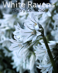 White Ravens' Poetry Collection