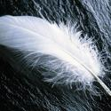 Fearful Feather
