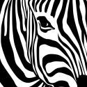 Den stribede zebra