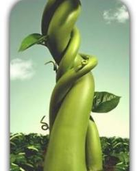 Jack Bauer and the Beanstalk