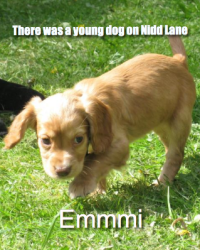 There was a young dog on Nidd Lane