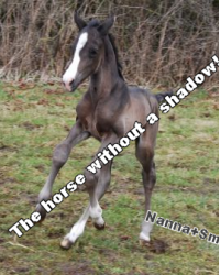 The horse, without the shadow