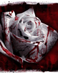 Beauty stained with blood