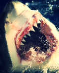it was only one shark bite.. for so i thought