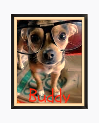 Buddy: A story about a dog where the dog doesn't die at the end.