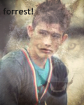 The darkest forrest.