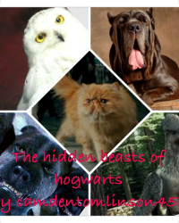 The hidden beasts of Hogwarts
