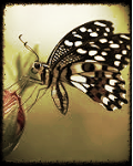 The Butterfly Book of Poems