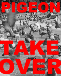 Pigeon Takeover