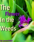 The Flower in the Weeds
