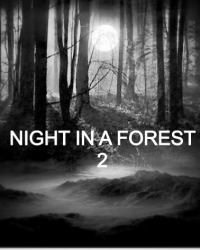 NIGHT IN A FOREST 2