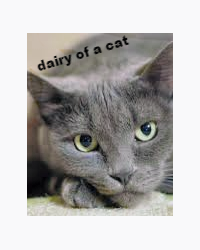 dairy of a cat