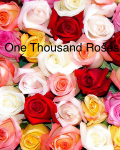 One Thousand Roses
