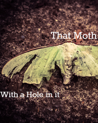 That Moth with a Hole in it