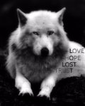 LOST (Love, Hope, Lost Trust)