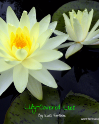 Lily-Covered Lies