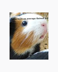 Tales from an average Guinea pig.