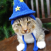 the white wizard cat